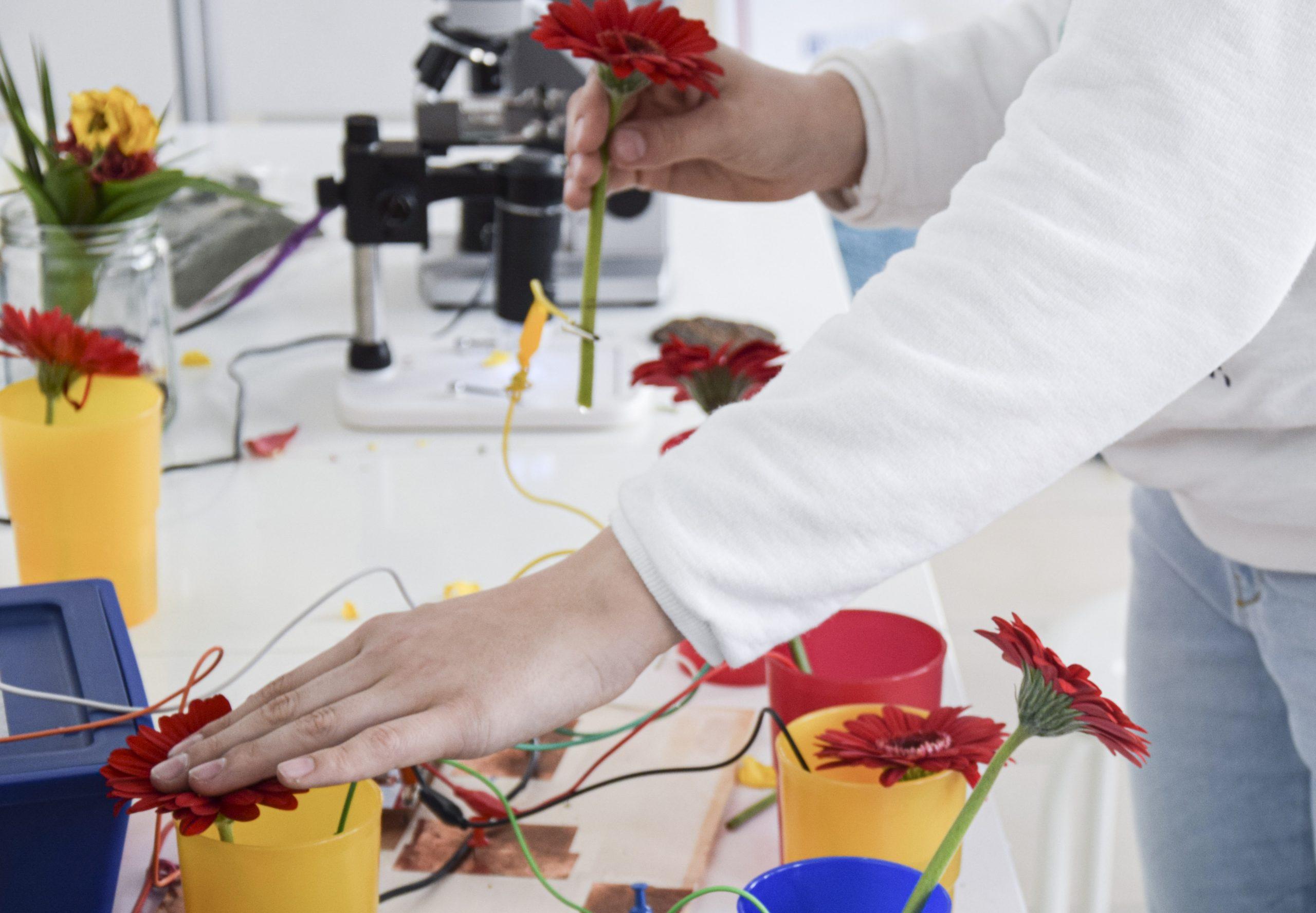 Close Up von einem Experiment mit Blumen