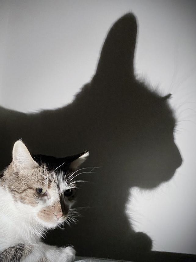 Eine Katze und ihr Schatten
